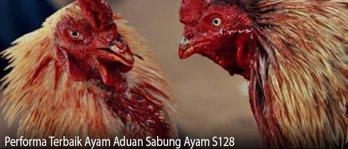 Performa Terbaik Ayam Aduan Sabung Ayam S128